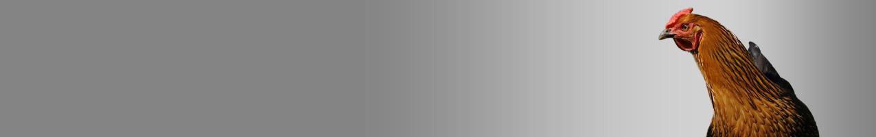 Gefl-gelhaltung-2592ebfb7c2c59