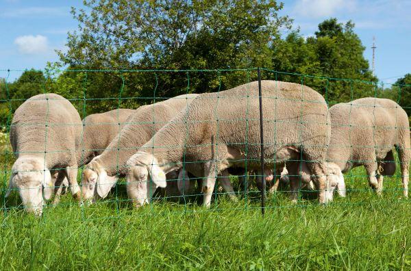 OviNet Schafnetz Einzelspitze 108 cm - 50 m grün